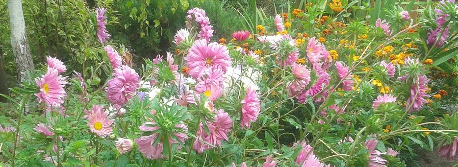 foto-kwiat4