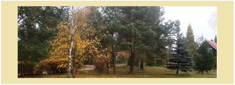 Jesień-8